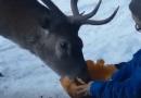 Kevin e il cervo Willy, la fiaba continua…